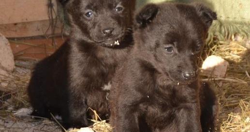 Очаровательные щенки ищут семью