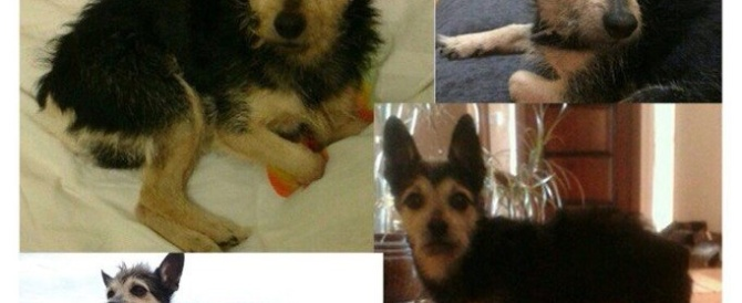 Пропала маленькая собака!