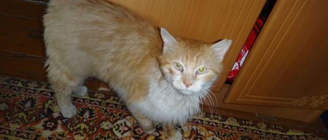 Взрослый кот обрел свой дом!