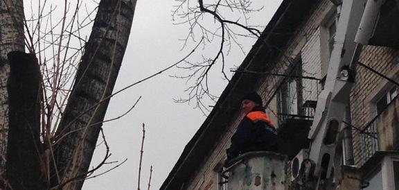 Организация не смогла остаться в стороне, когда котик просидел на дереве четыре дня в дождь и холод.