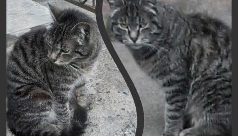 Молодой кот. Возраст 1 год.