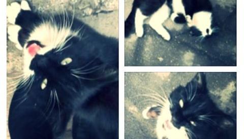 Кот в поисках семьи.