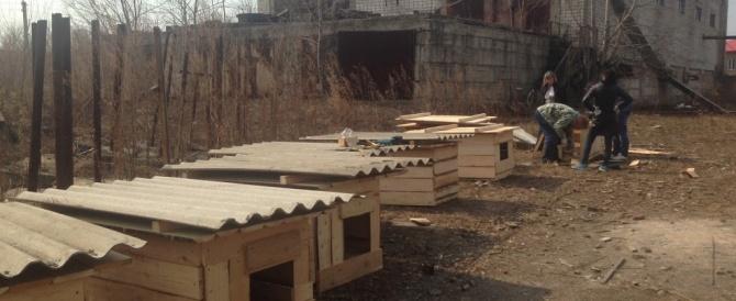 26 апреля мы собрались на строительство нового приюта.