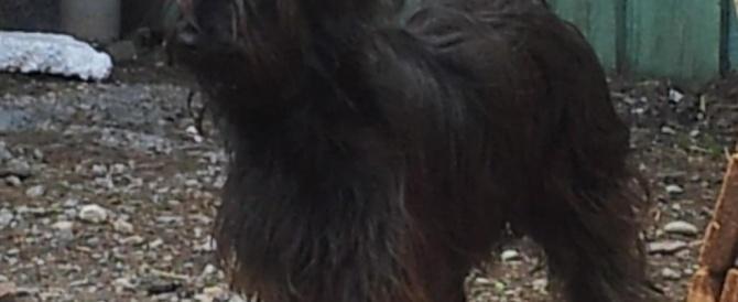 Милла – длинноволосая черная красавица мечтает о собственном доме!