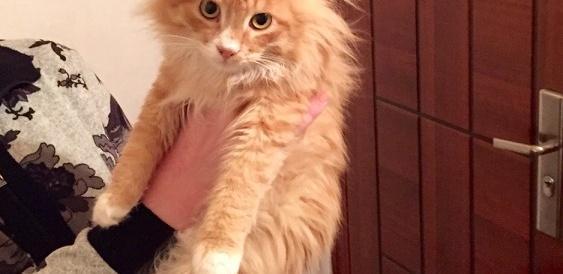 Ищем семью для молодого котика ( около года).