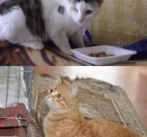 Особенные кошки в поисках настоящего хозяина.