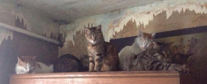 Бабушка умерла – остались кошки и собаки!