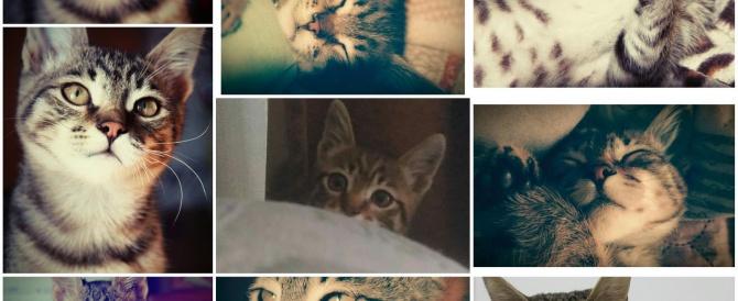 Вчера 10.05.2016г. ушел на радугу наш всеобщий любимец Тигр, ему было всего 6 месяцев!