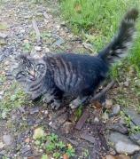 Кошка брошенная на даче.